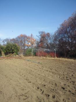20121124冬の畑