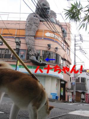 IMG_7242_convert_20111009084402.jpg