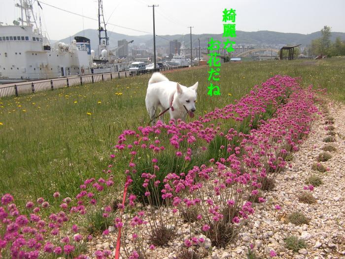 001_convert_20110621201517.jpg
