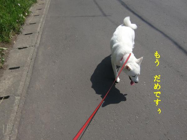 005_convert_20110629185522.jpg