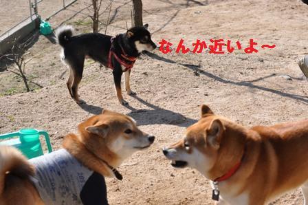 blog1131.jpg