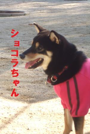 blog1137.jpg