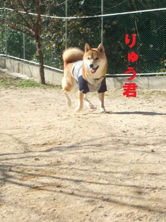 blog1148.jpg