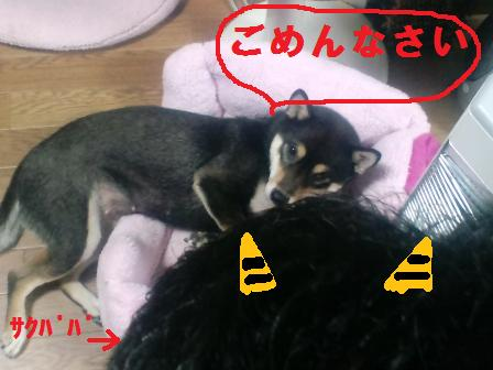 blog1245.jpg
