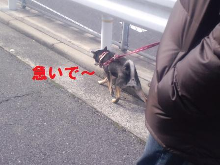 blog1246.jpg