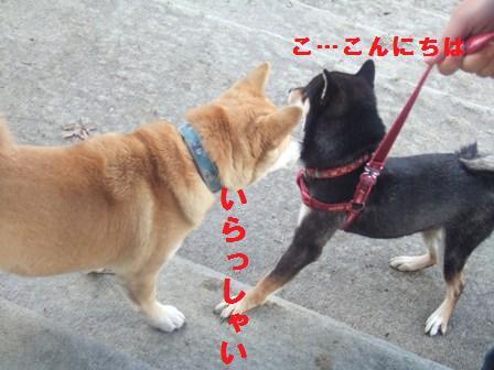 blog1298.jpg