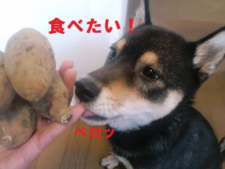 blog1333.jpg