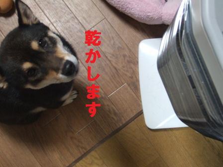 blog1368.jpg