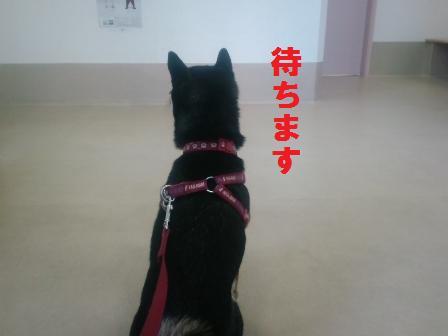 blog1375.jpg