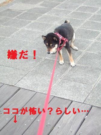 blog1381.jpg