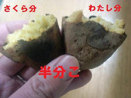 blog1419.jpg