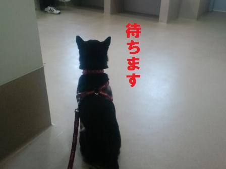 blog1433.jpg