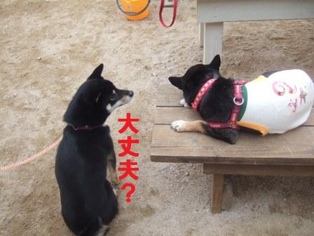 blog1483.jpg