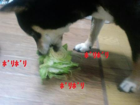 blog1816_20110421194026.jpg