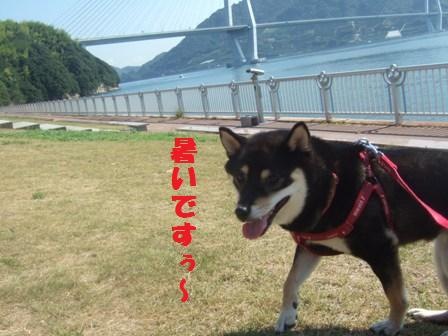 blog2295.jpg