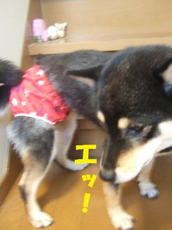 blog2369.jpg