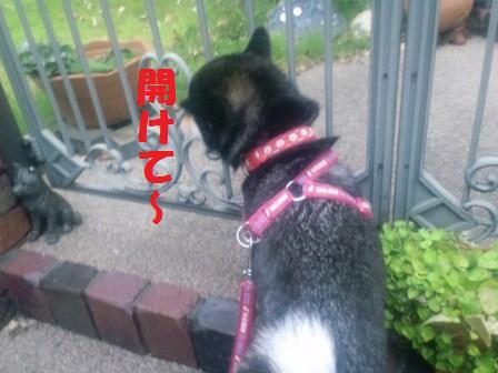 blog2441.jpg