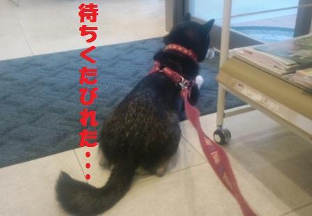 blog2463.jpg