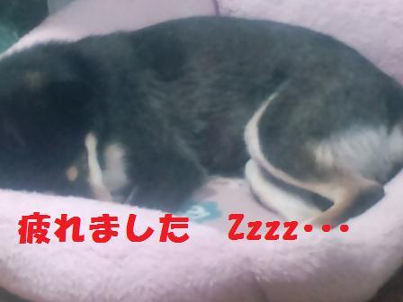 blog2466.jpg