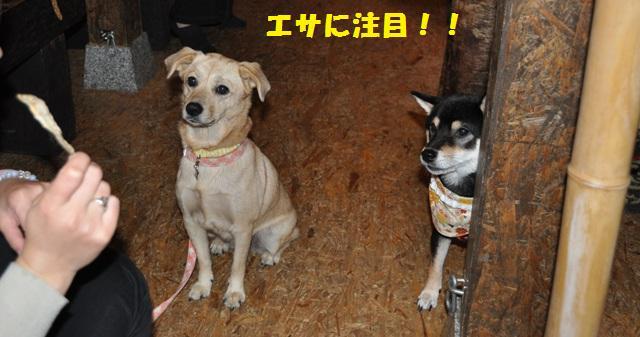 blog2493.jpg