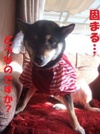 blog2906.jpg