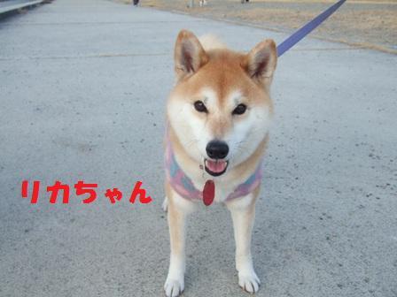 blog2978.jpg