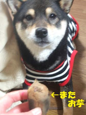 blog2983.jpg