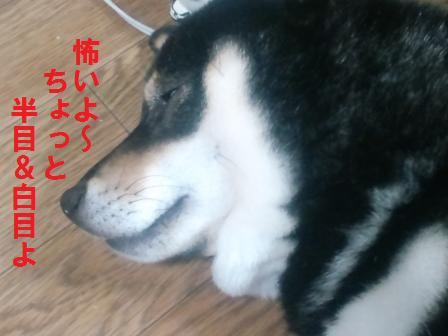 blog310.jpg