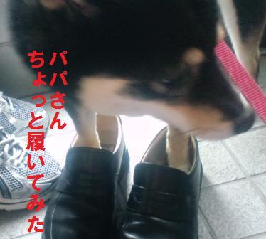 blog311.jpg
