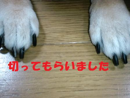 blog3162.jpg