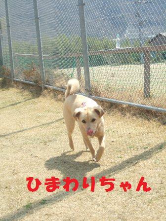 blog3271.jpg
