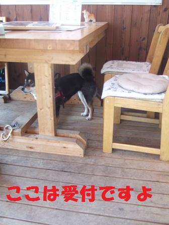 blog3287.jpg