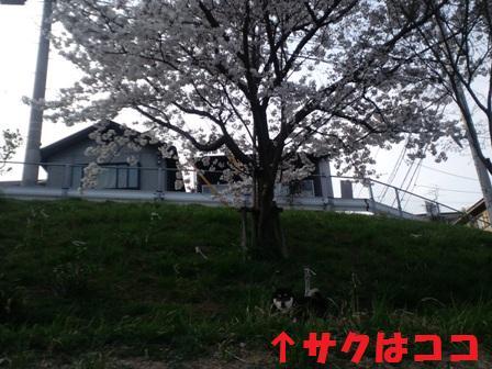 blog3340.jpg