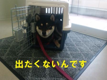blog339.jpg