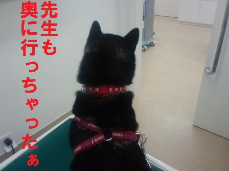 blog415.jpg