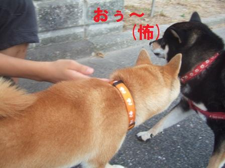 blog478.jpg