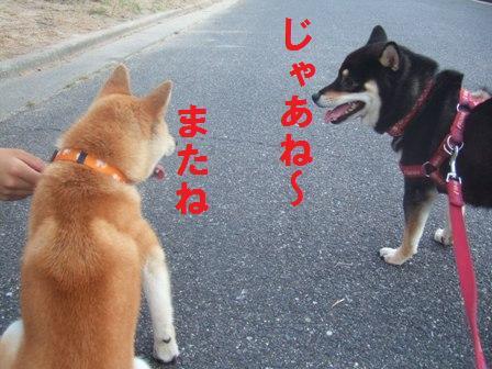 blog480.jpg