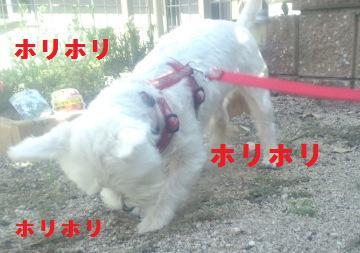 blog541.jpg