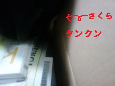 blog606.jpg