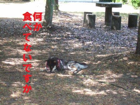 blog622.jpg