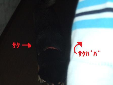 blog773.jpg