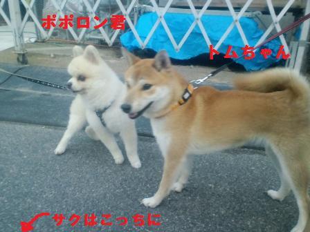 blog794.jpg