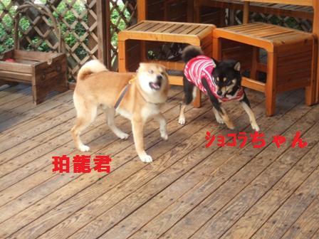 blog818.jpg