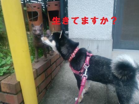 blog925.jpg