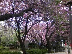 bijy2010_040524.jpg