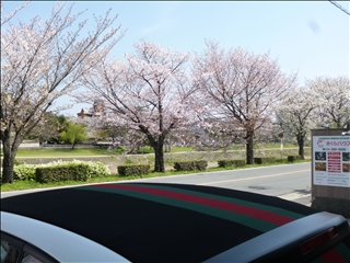 2013-04-04さくら並木 ブログ