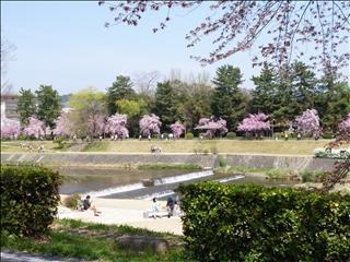 2013-04-04さくら並木 ブログ (3)