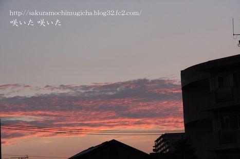 IMG_0442_20120731001910.jpg
