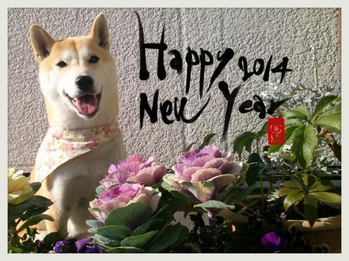2013-12-31-10-52-58_deco.jpg