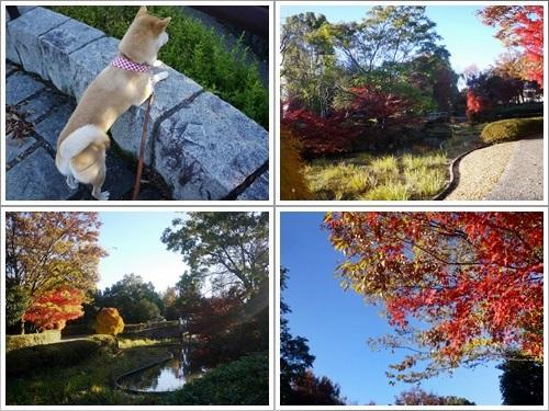 芸術の森公園40